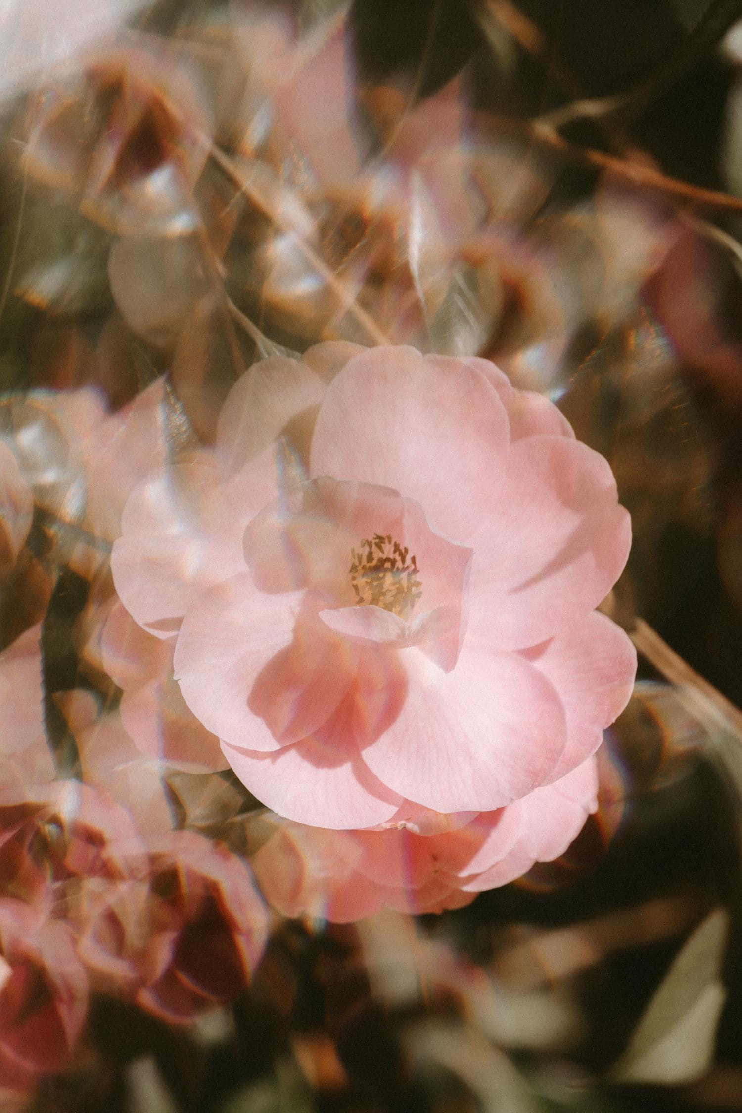 fotografía experimental con flores