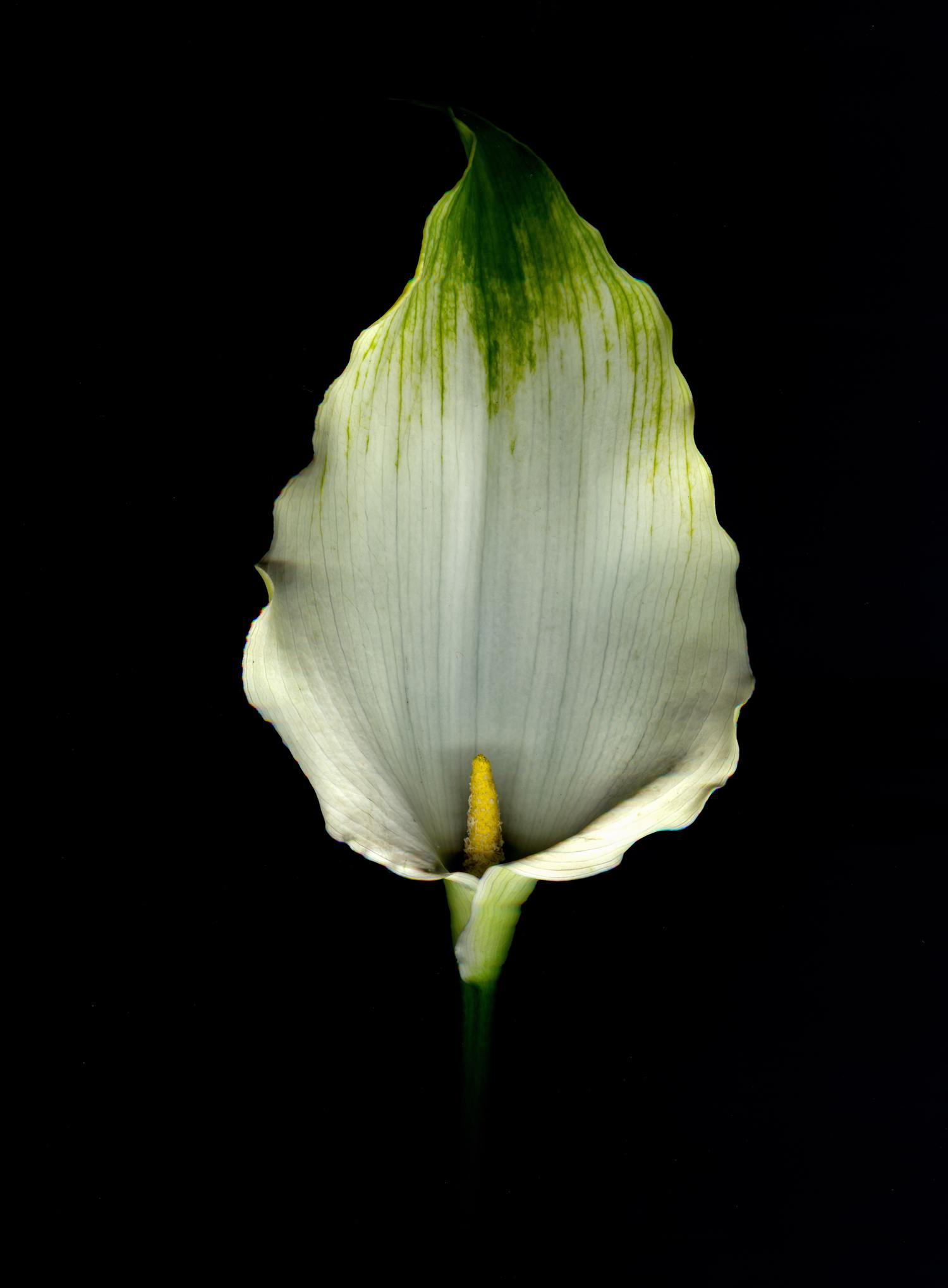 Flor con fondo negro
