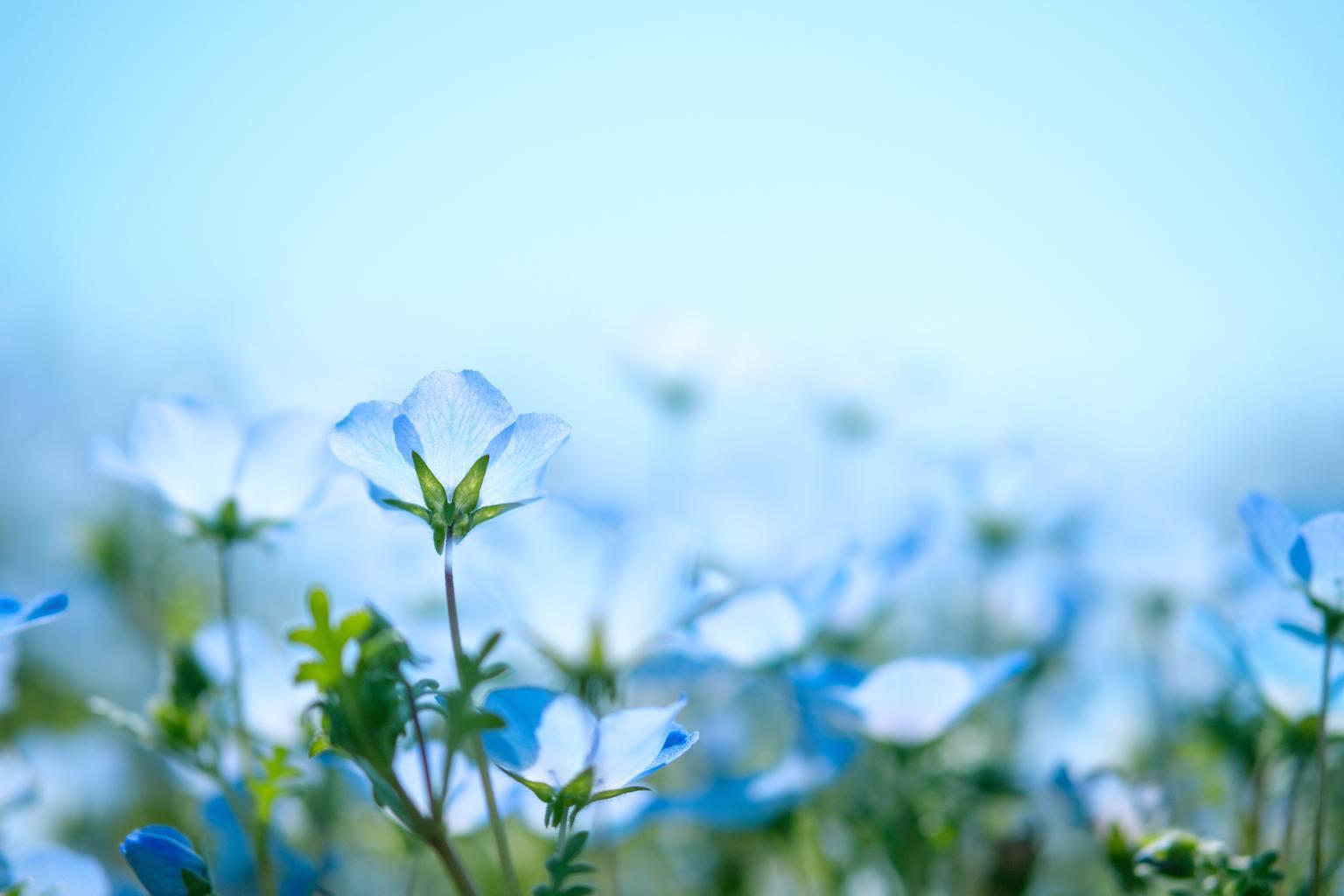 Flores azules con mucho desenfoque