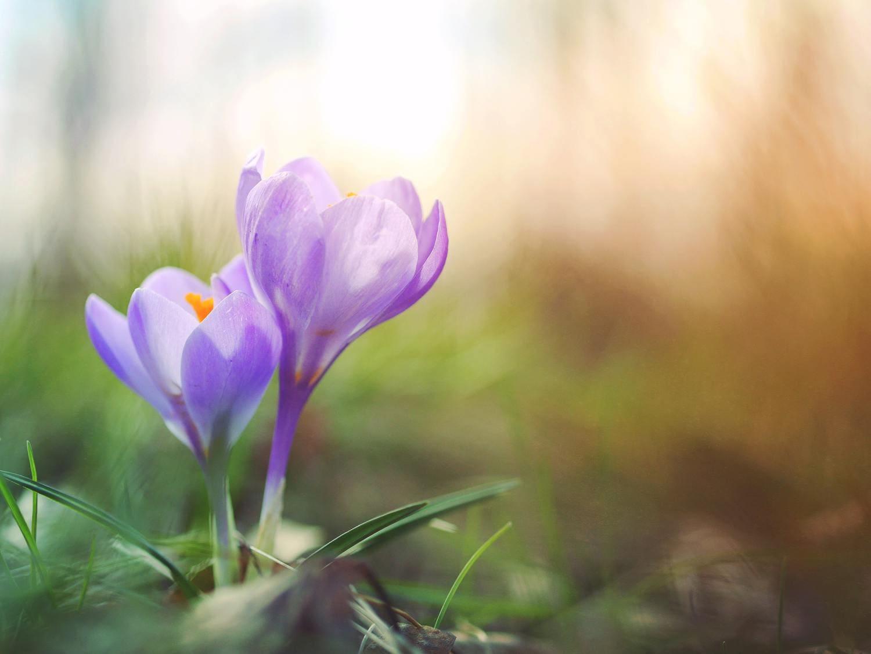 Flores lilas con fondo verde