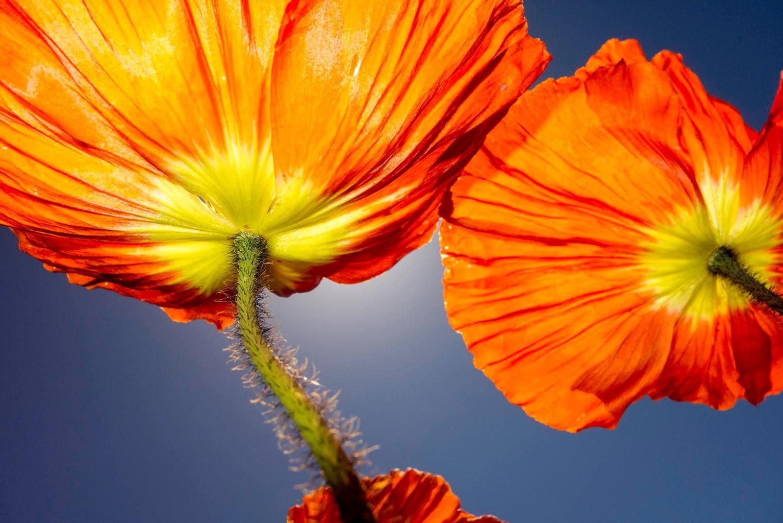 Flor con flash desde abajo
