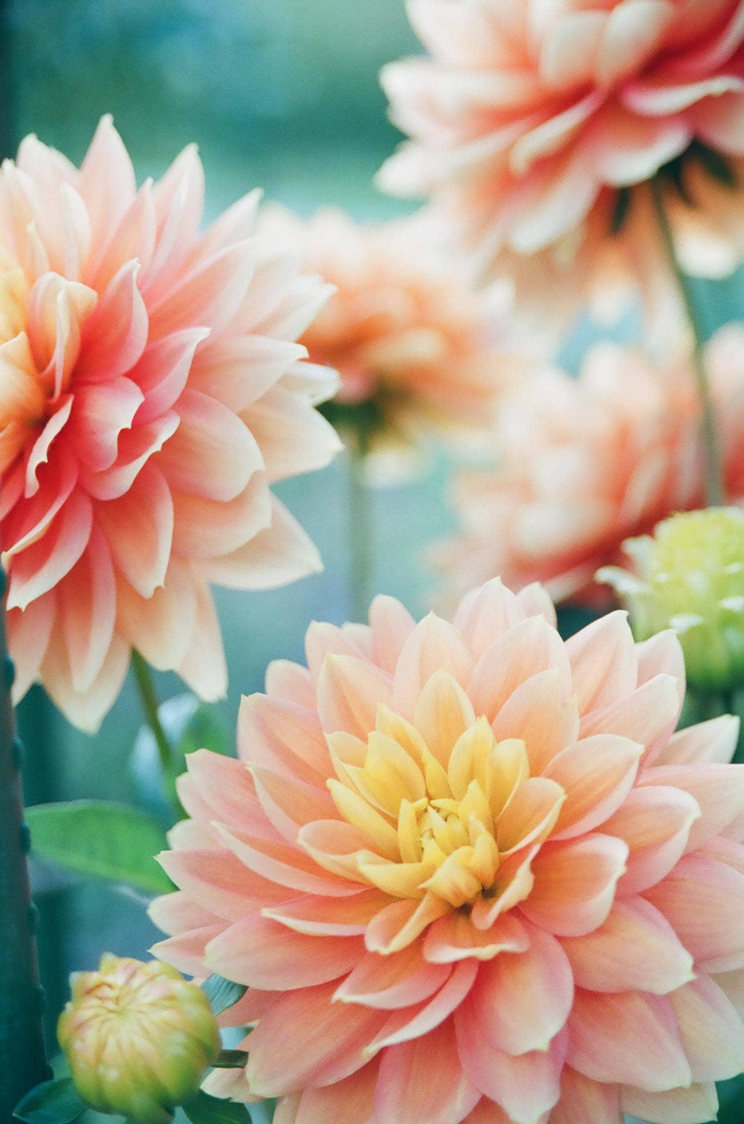 Flores rosas en conjunto