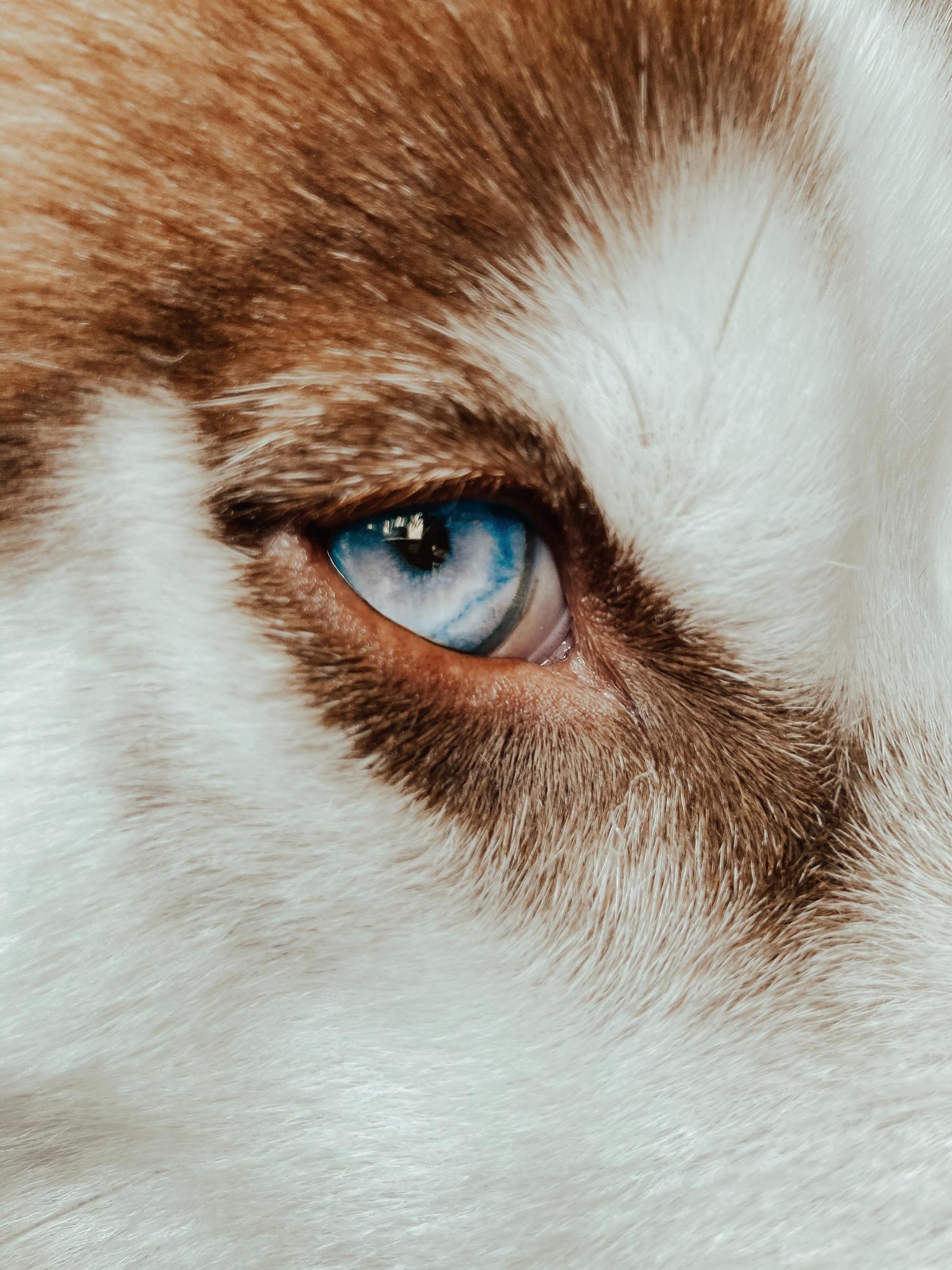 Ojo y pelo de animal