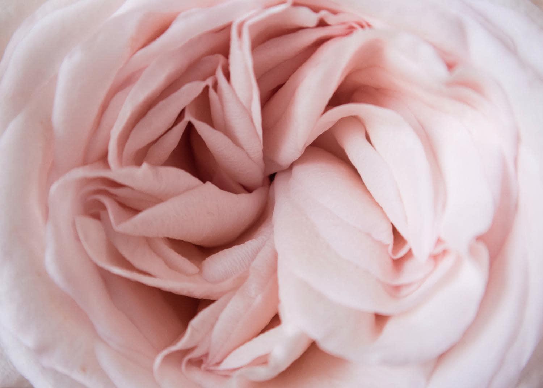 Flor delicadeza