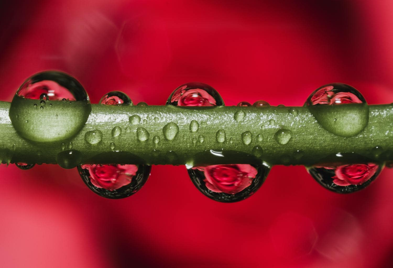gotas de agua en planta fotografiadas con objetivo macro