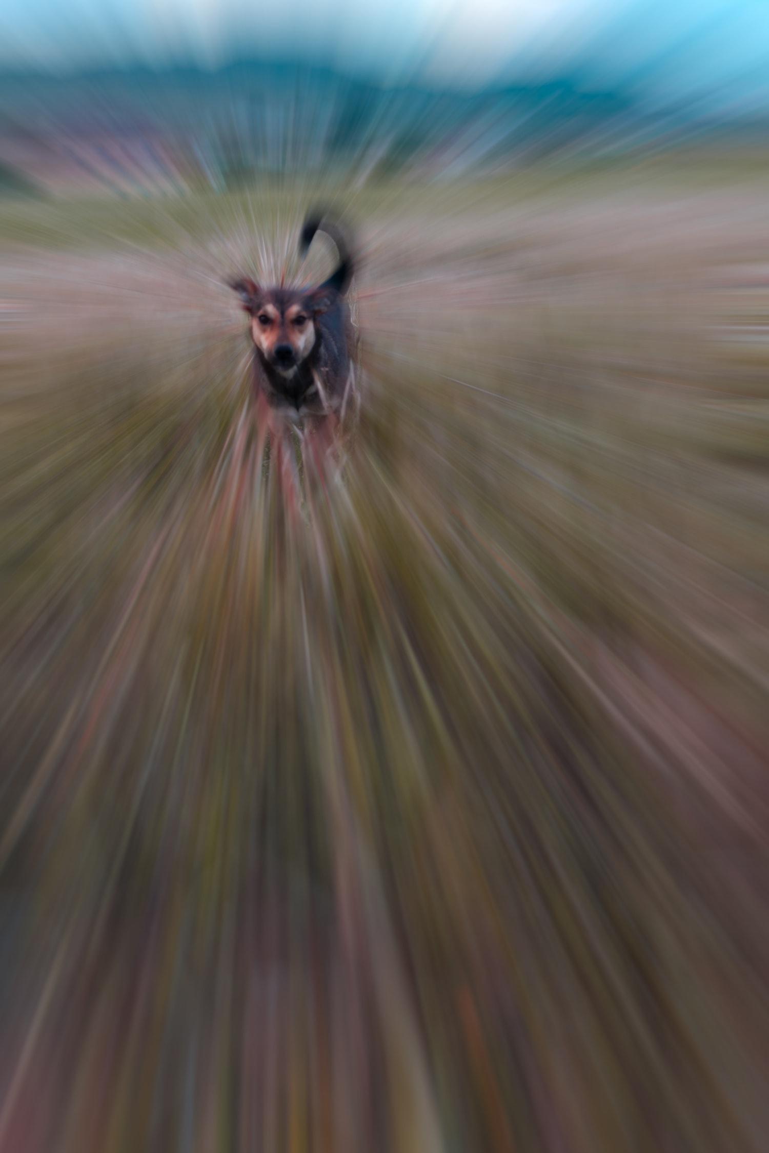 perro en zooming