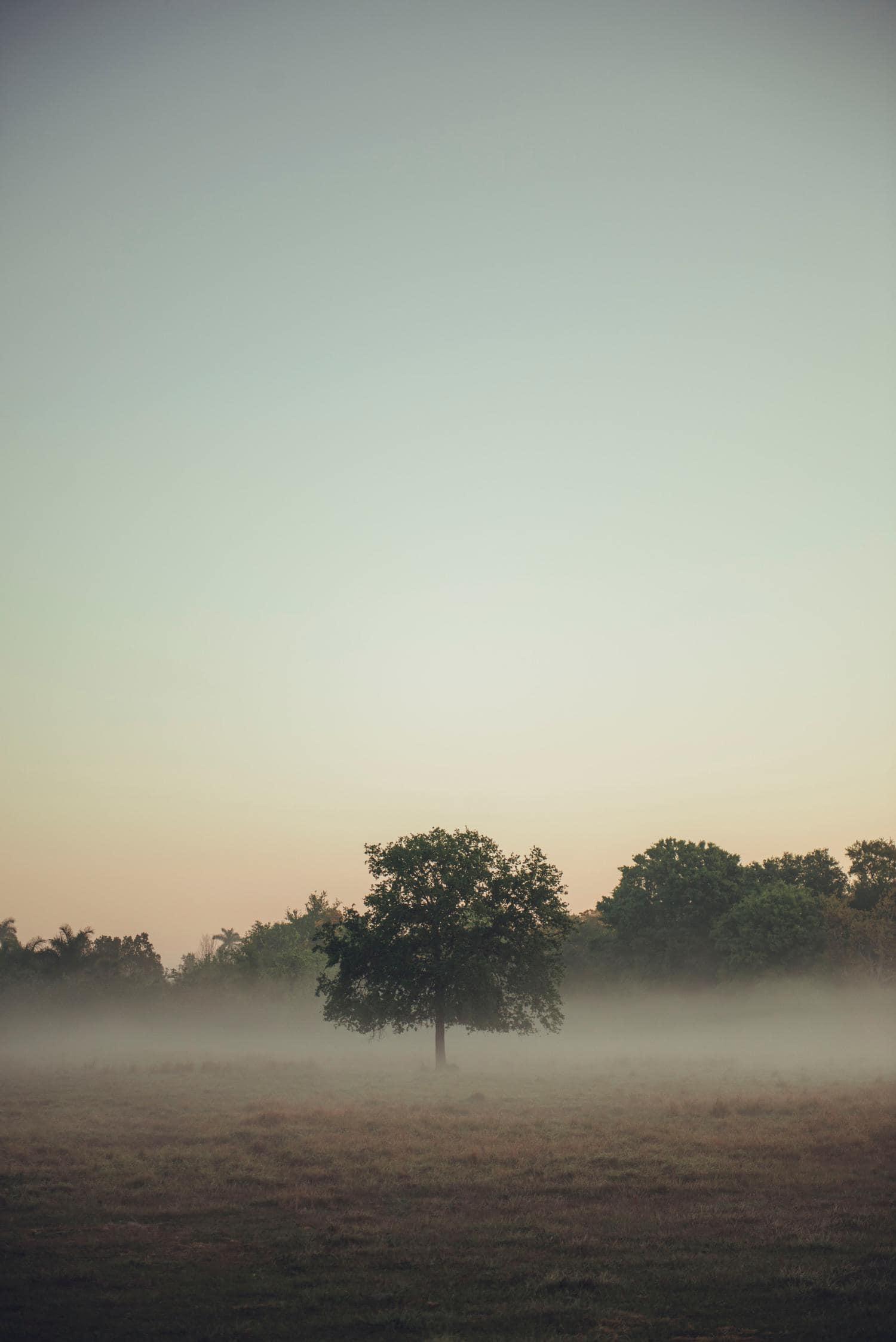 niebla fotografía naturaleza