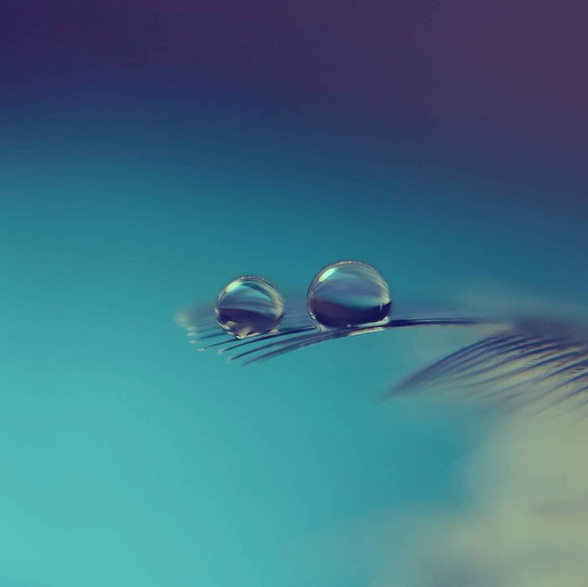 Fotografía de dos gotas de agua sobre pluma ganadora fotoreto116 delicado