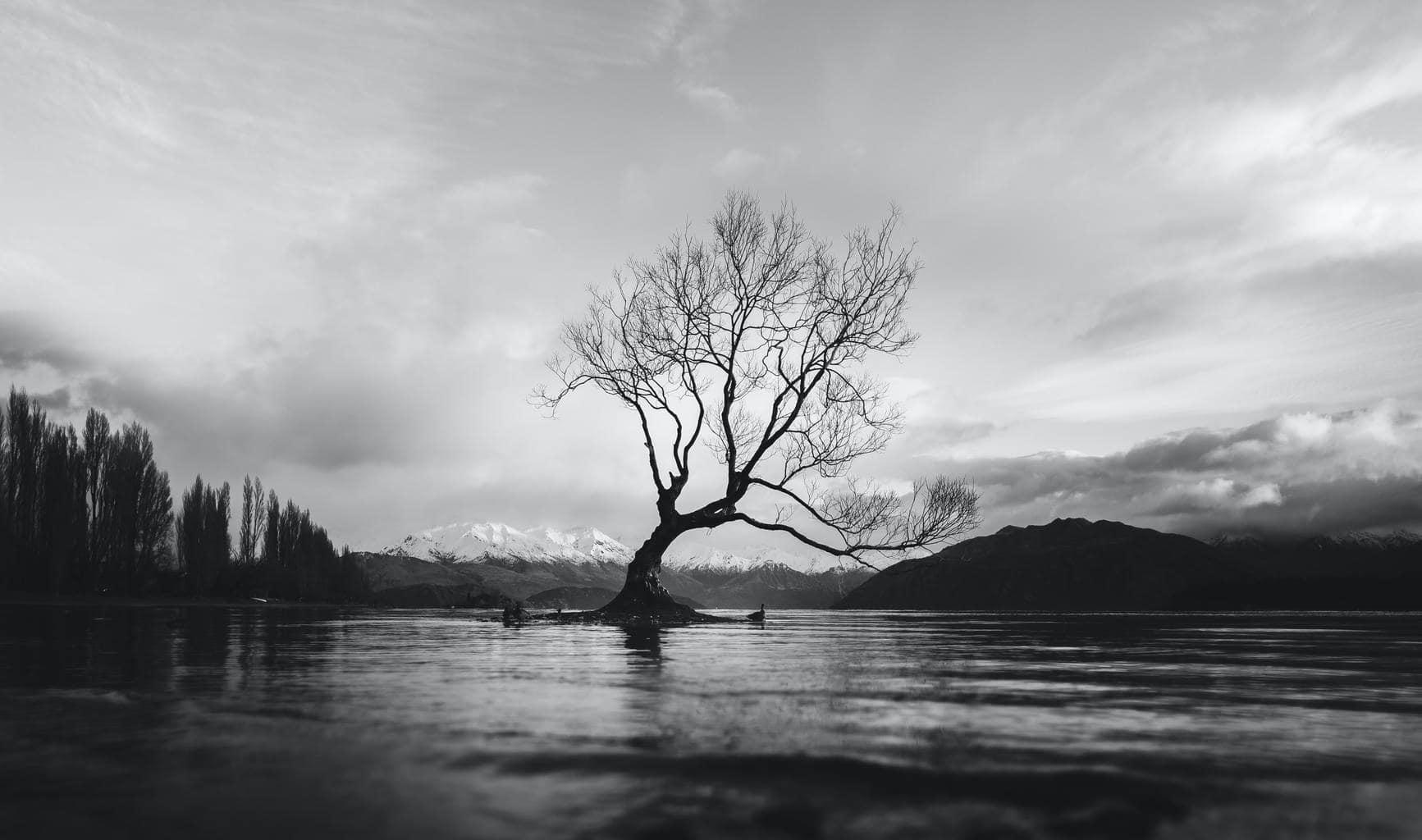 naturaleza blanco y negro